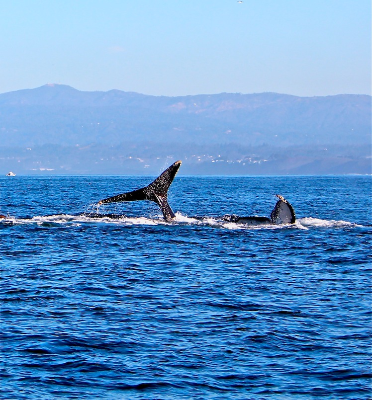 Sanctuary Cruises whale watching adventure