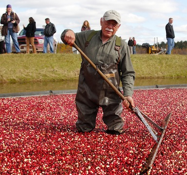 Wisconsin–Cranberry Capital of the World