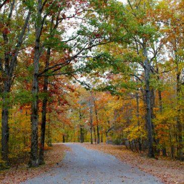 Village Creek State Park–Arkansas Hidden Gem