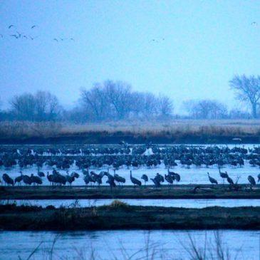 The Crane Trust–Protecting Habitat