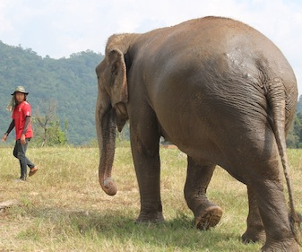 Julie Henning Reports from Chiang Mai, Thailand