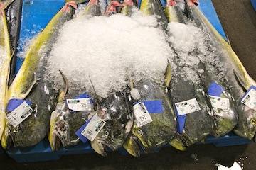 Fresh Catch at Honolulu Fish Auction