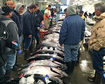 The Honolulu Fish Auction—an insider's tour with Dr. John Kaneko