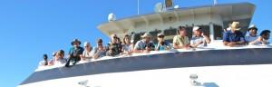 San Diego Hornblower Whale cruise