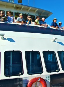 whale watching aboard Hornblower Cruises San Diego