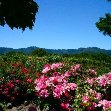Mount Eden Vineyards–Premier Chardonnay & Pinot Noir