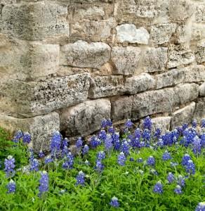 Texas Bluebonnets in Burnet County