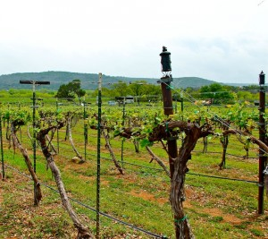Perissos Vineyards Burnet County Texas