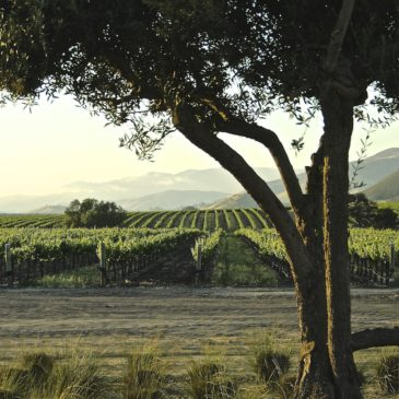 Getaway: A Wine Lover's Weekend Along California's Central Coast