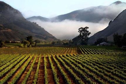 Santa Maria Valley's Qupé Vineyards–a Rhône pioneer