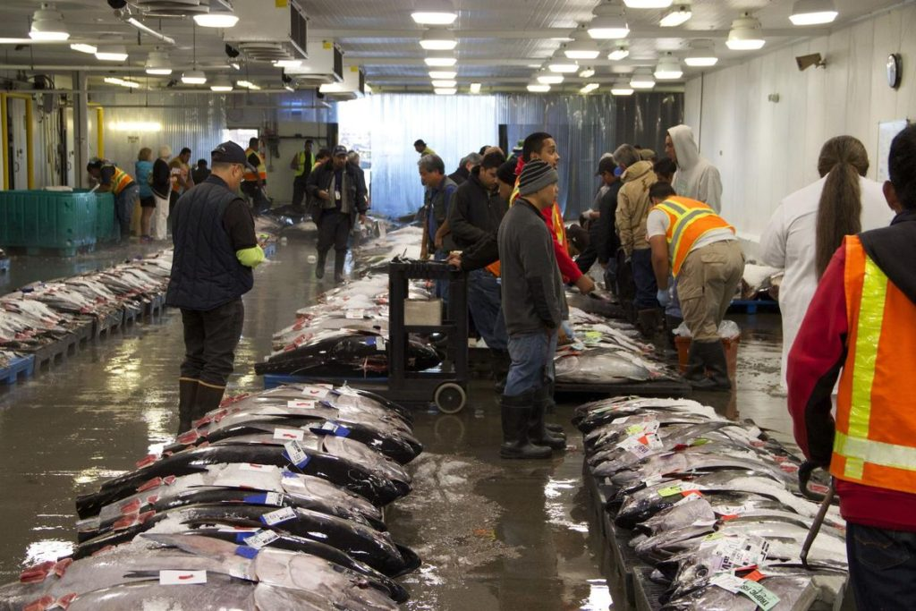 Wholesale buyers inspect the fresh catch at Honolulu fresh fish auction house