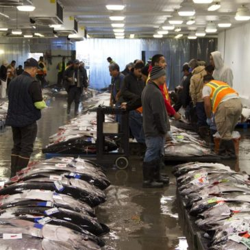 Honolulu's fish auction house visit with Hawaii Seafood Council