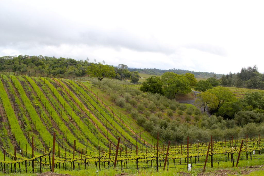 Trattorei Farms, Dry Creek Valley, Sonoma County. Photo Credit: Tom Wilmer