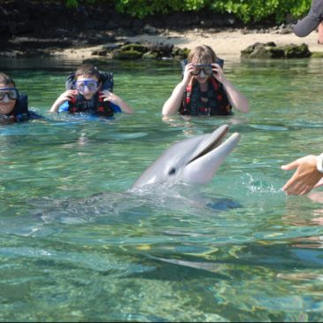 Dolphins teaching environmental awareness on Big Island Hawaii